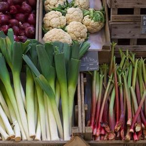 野菜の色彩に学ぶ・熊本・…
